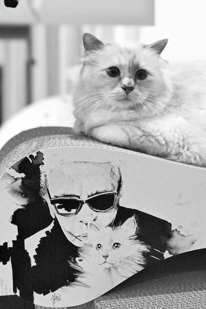 Autor: Choupette by Karl Lagerfeld