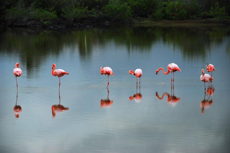 Galapágy v Ekvádoru