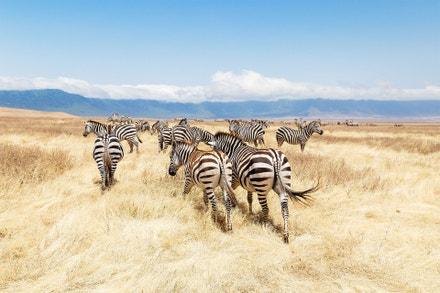 Chráněná oblast Ngorongoro, Tanzánie