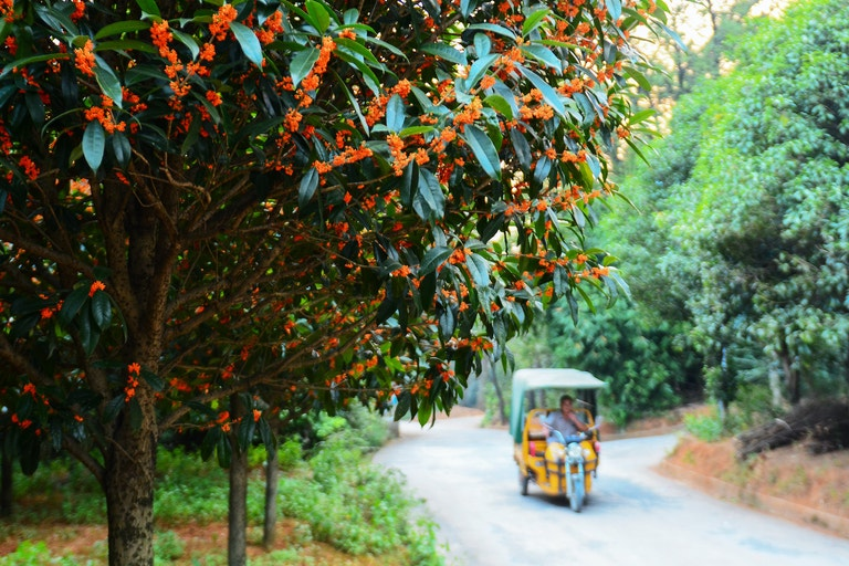 Rozkvetlé stromy vonokvětky v čínském Guilinu